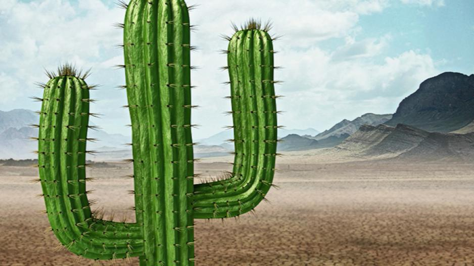The MOBOTIX Cactus Concept